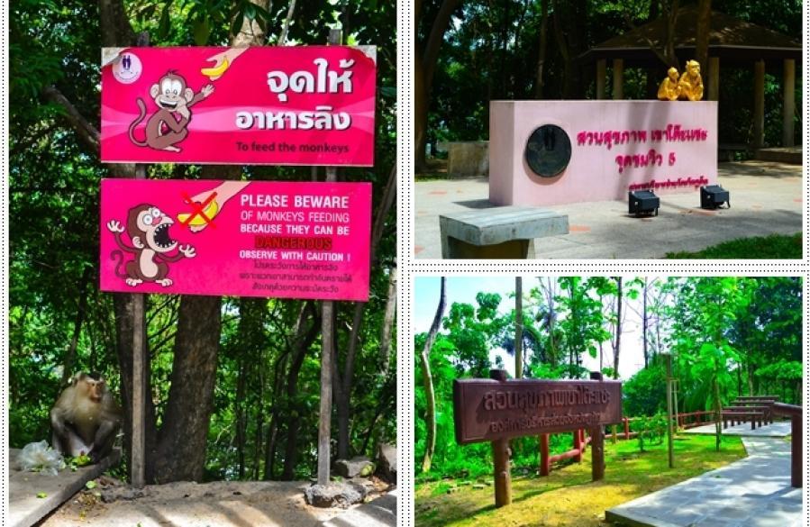 Malgré les messages d'avertissement, de nombreuses personnes viennent quotidiennement à Khao Toh Sae pour nourrir les singes sauvages