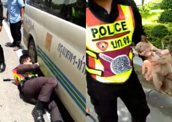 Un policier est venu en aide à un chaton qui s'était retrouvé coincé sous un van