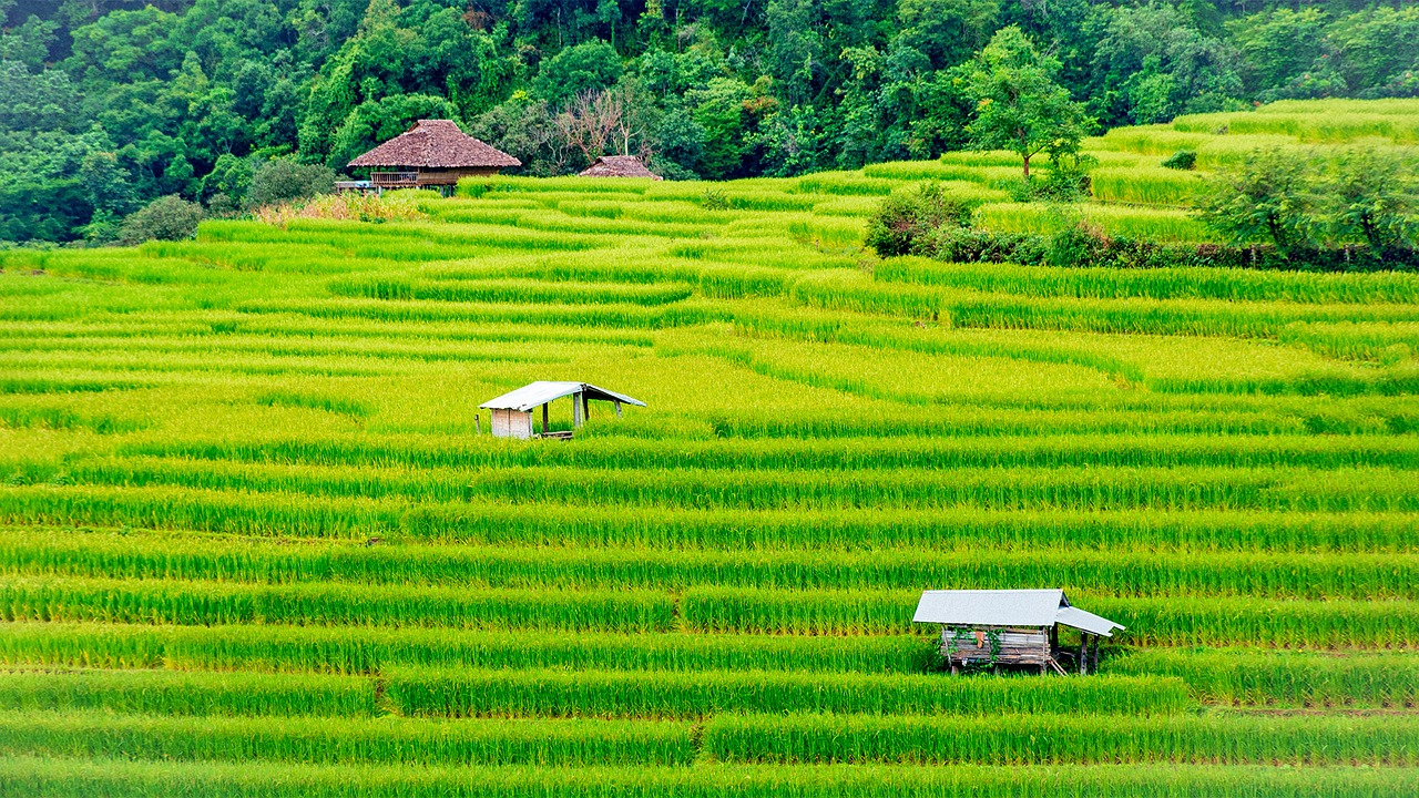 Les exportations de riz thaïlandais ont battu des records en 2017