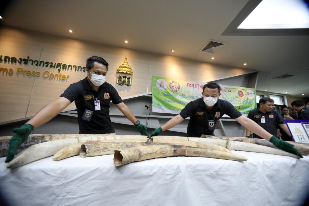 31 défenses d'éléphants ont été saisies par les autorités à l'aéroport Suvarnabhumi de Bangkok