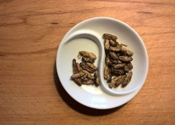 Les insectes s'invitent dans les restaurants gastronomiques