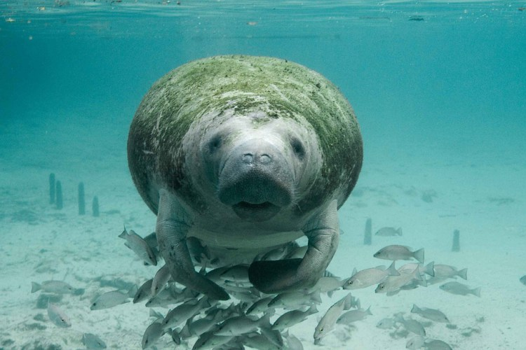 La population de dugongs dans le sud de la Thaïlande a atteint son niveau le plus important depuis 20 ans