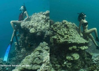 1500฿ d'amende pour s'être assis sur des récifs coralliens