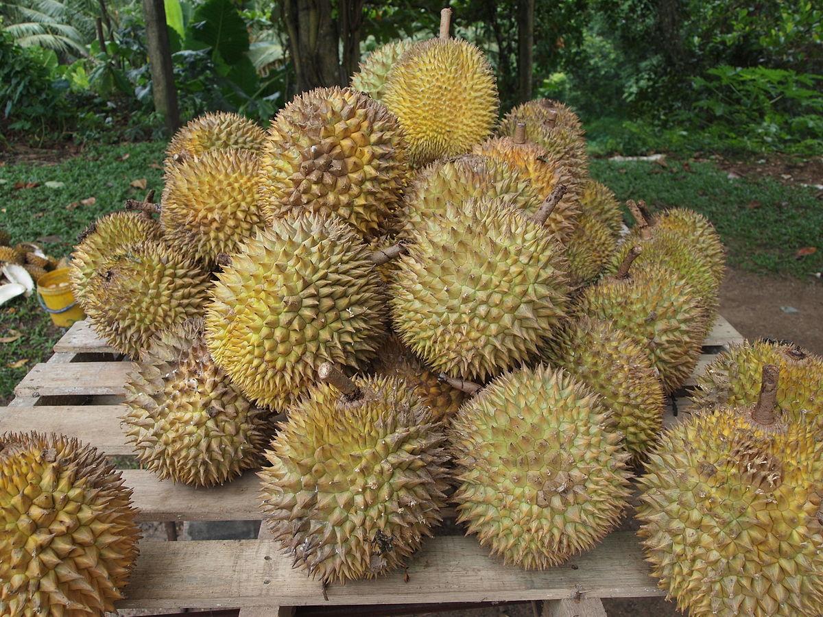 Alors que la demande provenant de Chine pour le durian ne cesse de croître, les producteurs thaïlandais se plaignent de ne pas pouvoir suivre cette cadence