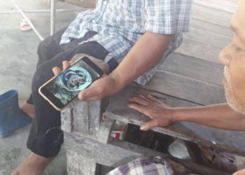 Krabi : 27 cobras trouvés dans une plantation d'hévéas