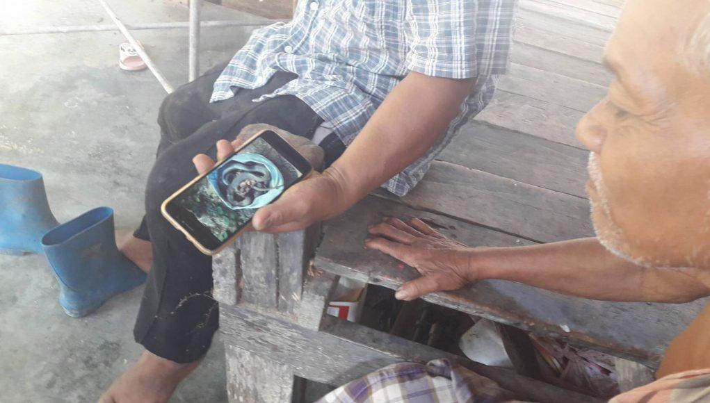 Un ouvrier d'une plantation d'hévéas, dans la province de Krabi, a eu la désagréable surprise de découvrir 27 cobras