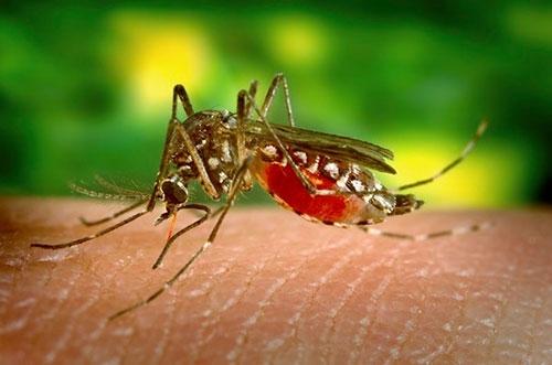 Les autorités de santé publique thaïlandaises ont mis en garde contre la mortalité important liée au virus de la dengue cette année