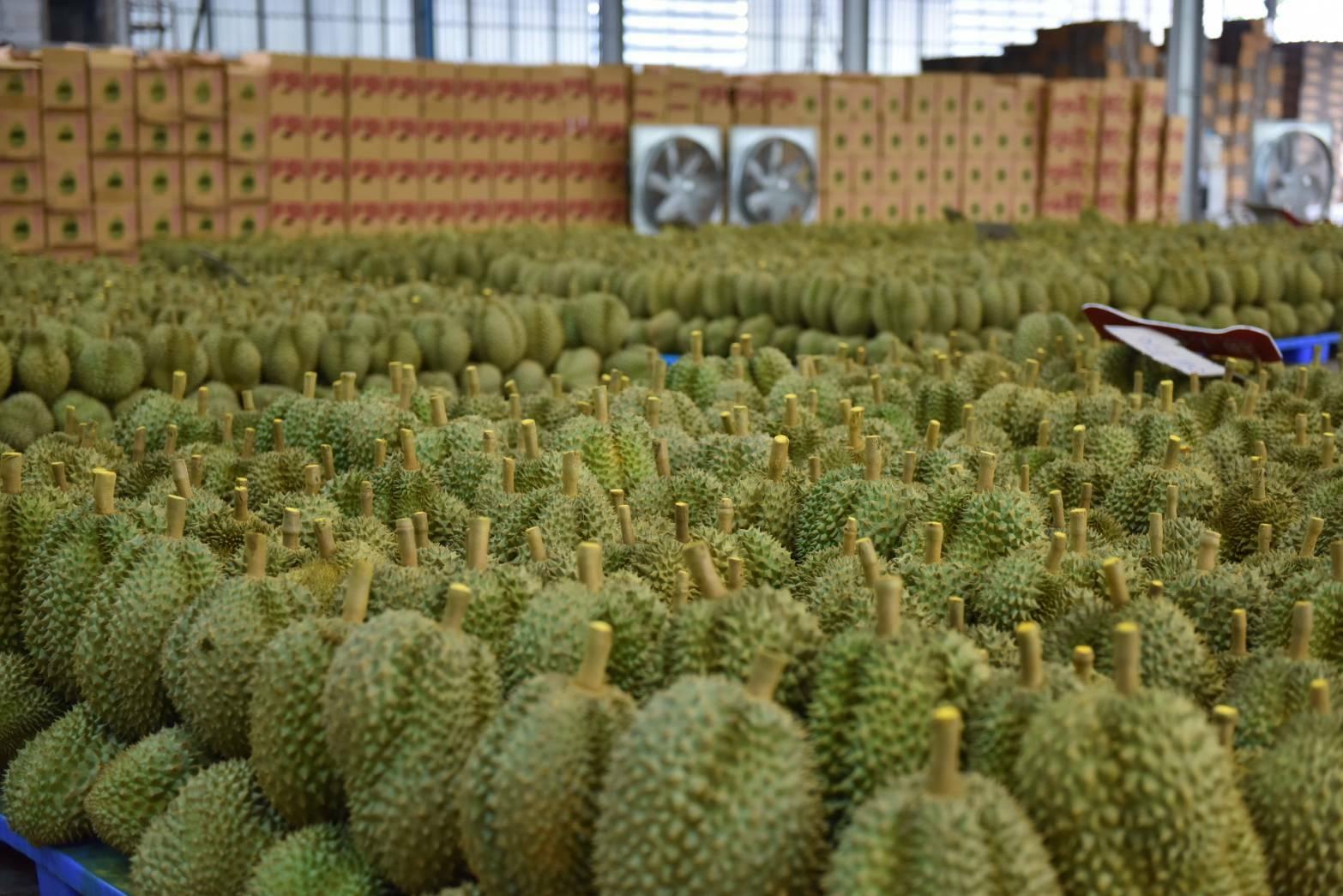Les achats de durians thaïlandais par la Chine ont continué d'augmenter au mois d'avril 2018