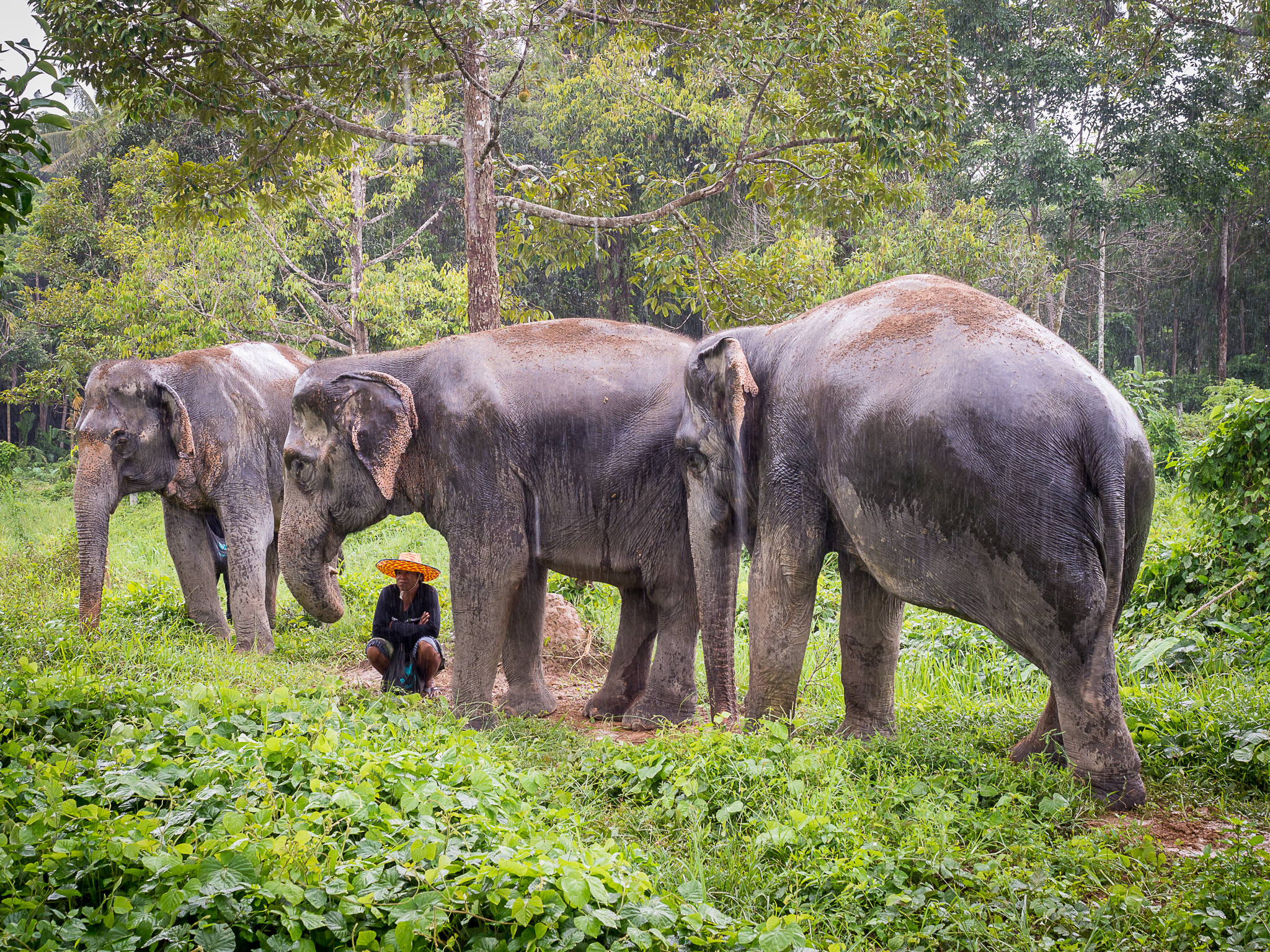 Éléphants sous la pluie au Phuket Elephant Sanctuary