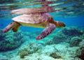 Plus de 20 tortues marines mortes au large de Phuket et Phang Nga en 2 mois