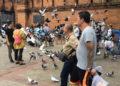 Chiang Mai : les touristes invités à ne pas nourrir les pigeons