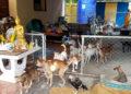 La Thaïlande comptera 2 millions de chiens et chats errants en 2027