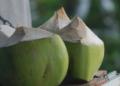 Les importations accusées de faire chuter le prix des noix de coco thaïlandaises