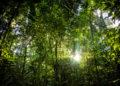 Brésil : la déforestation de l'Amazonie au plus haut depuis 10 ans