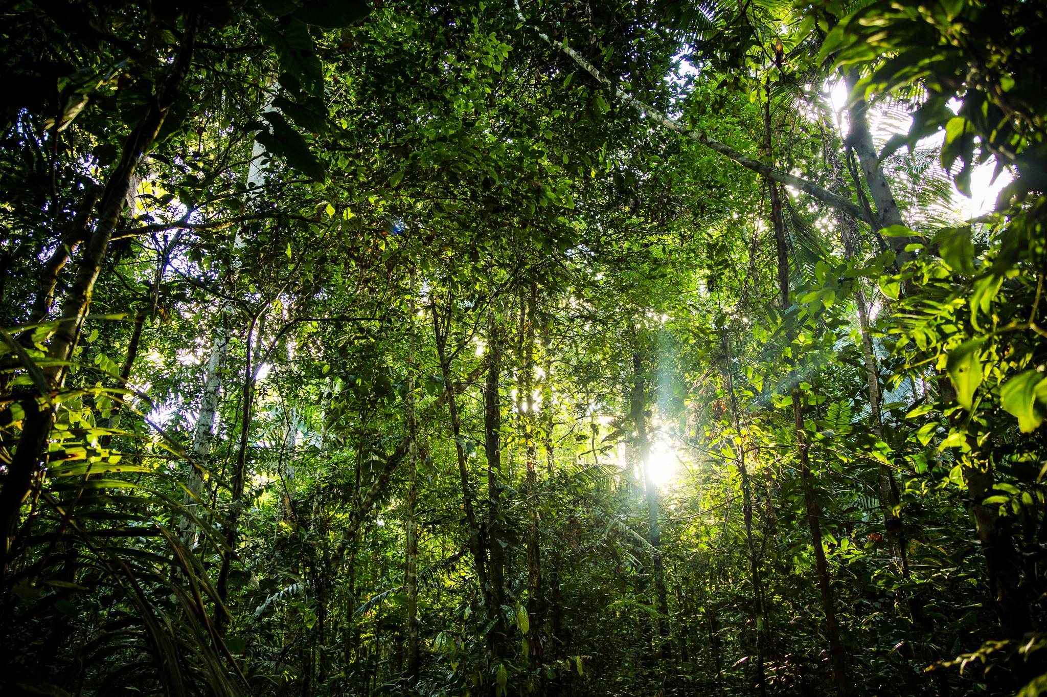 Les chiffres du gouvernement brésilien indiquent que la déforestation dans la forêt amazonienne du pays a atteint son plus haut niveau depuis 2008