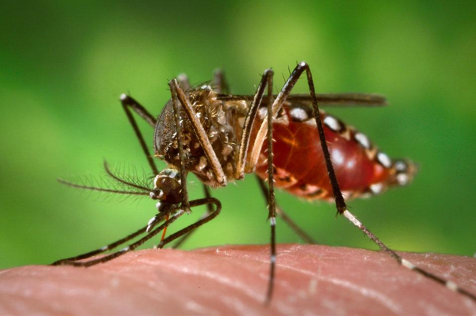 Chikungunya : plusieurs cas signalés dans l'extrême sud de la Thaïlande