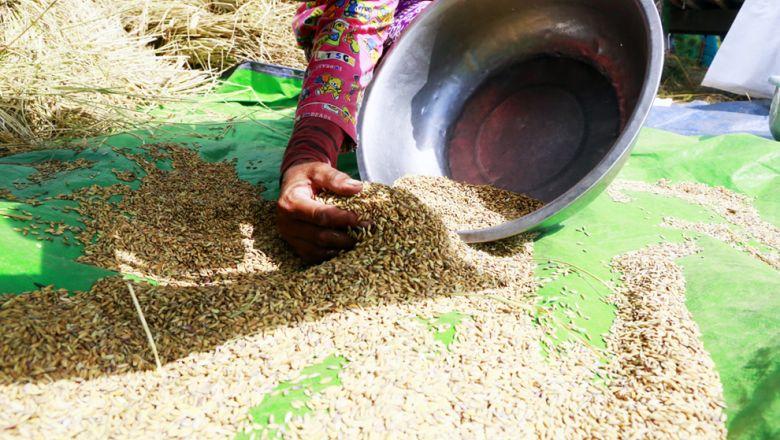 Le riz cambodgien va perdre son statut de produit exempté de droits de douane dans l'UE