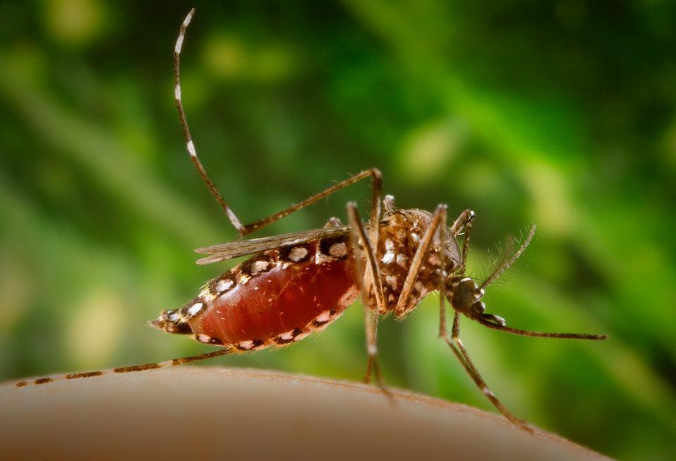 La dengue progresse dans le nord-est de la Thaïlande, 9 000 cas et 7 décès cette année