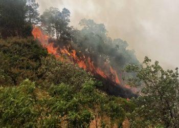 Près de 430 000 hectares de forêt détruits par les flammes dans le nord de la Thaïlande
