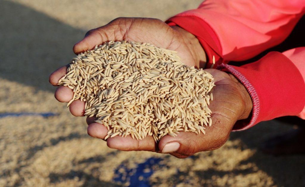 La vigueur du baht thaïlandais assomme les exportations de riz