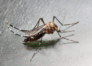 Les cas de chikungunya ont triplé en Thaïlande au cours de l'année 2019