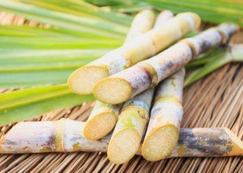 La sécheresse réduit la production de sucre en Thaïlande à son plus bas niveau depuis 9 ans