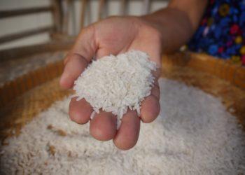 Les cours du riz thaïlandais au plus haut depuis sept ans