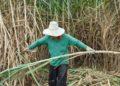 Le Viêt Nam impose un droit antidumping de 47,64 % sur les importations de certains produits à base de sucre en provenance de Thaïlande